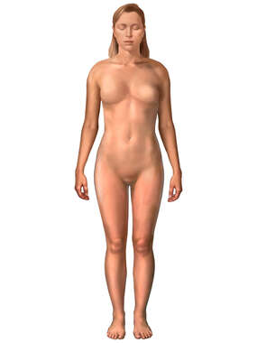 Anterior Female Figure