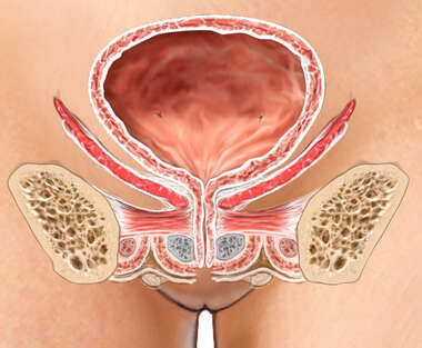 Female Bladder
