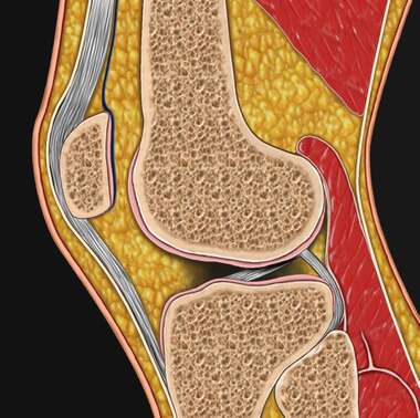 Knee- Cross Section