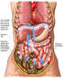 Abdominal Contamination Following Bowel Perforation