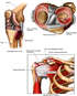 Knee and Shoulder Injuries
