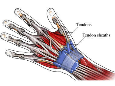 Tendon Sheaths in the Wrist