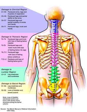 Effects of Nerve Damage Along the Spinal Cord