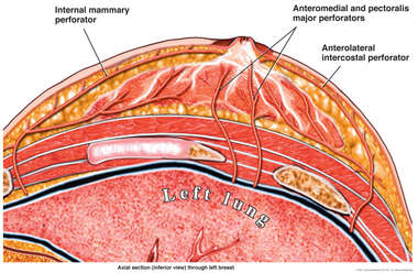 Breast Vasculature