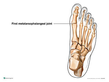 First Metatarsophalangeal Joint