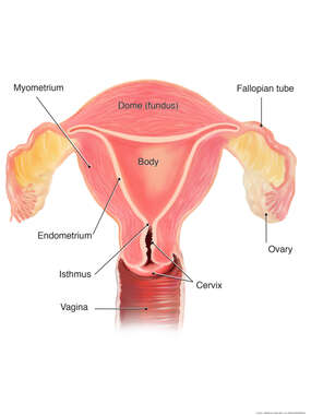 Anatomy of the Uterus