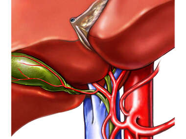 The Vasculature of the Liver