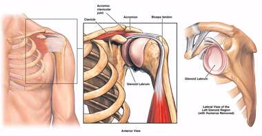 Anatomy of the Left Shoulder