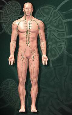Anatomy of the Lymphatic System, 3D Anterior Male
