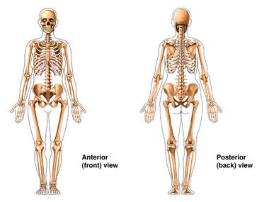 Skeletal System: Female