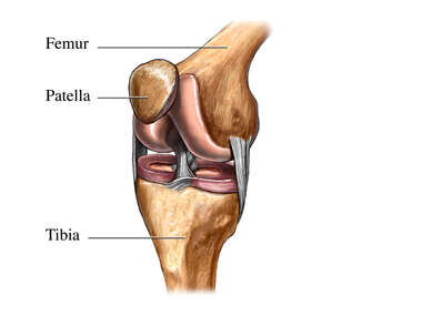 Normal Knee- oblique view