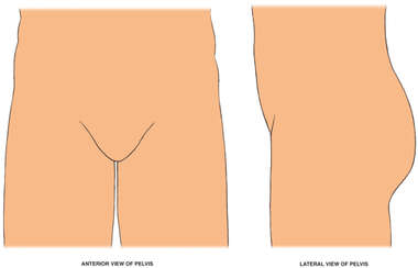 Orientation of the Pelvic Region
