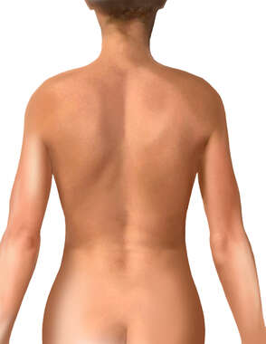 Female Torso: Posterior View