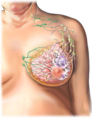 Breast Anatomy with Lymph Nodes