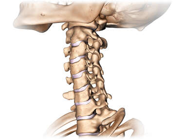 Anterolateral 3-4 View of Cervical Spine