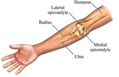 Elbow: Anterior (Front) View