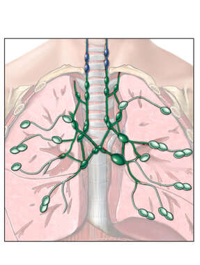Lymph Nodes of the Thorax