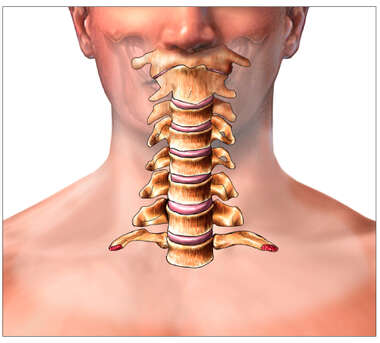 Anatomy of the Cervical (Neck) Spine