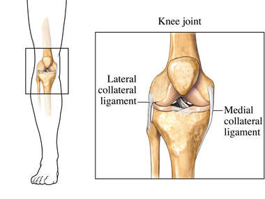 Collateral Ligaments