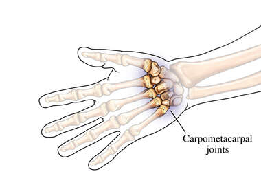 The Carpometacarpal Joints