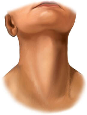 Neck Region of Young Woman