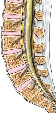 Lumbar Spine with Dura and Nerve Roots