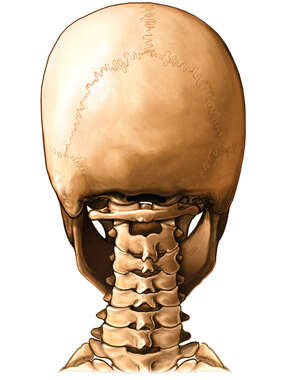 Cervical Vertebrae: Posterior view