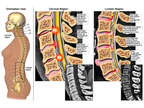 Cervical and Lumbar Spinal Injuries