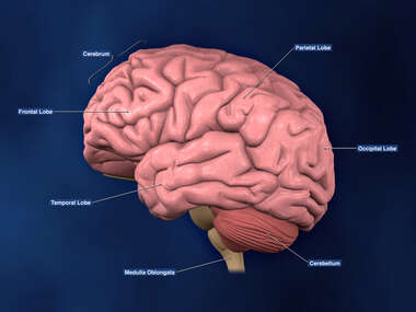 Left Lateral view of Brain with labels