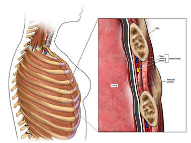 Chest side wall intercostal artery vein and nerve