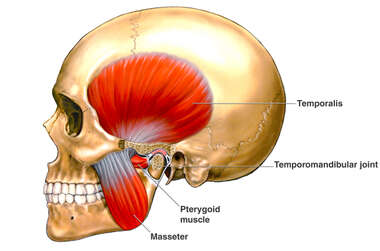 Temporomandibular Joint (TMJ) Anatomy