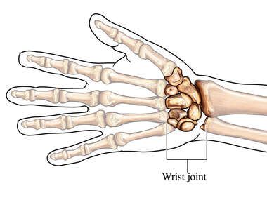 The Wrist Joint