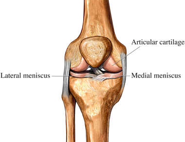 Cartilage of the Knee