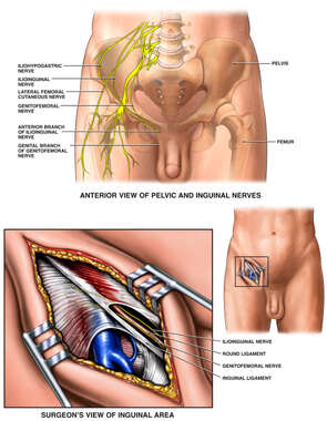Anatomy of the Inguinal Area