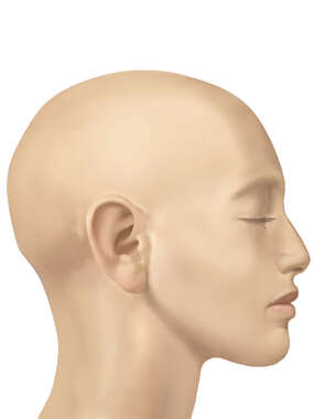 Lateral Head, Female, No Hair