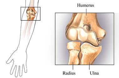 The Elbow Joint: Anterior (Front) View