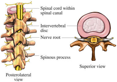 Anatomy of the Lumbar Vertebral Column