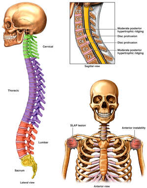 Injuries to the Cervical Spine and Bilateral Shoulders
