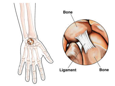 Ligament of the Hand