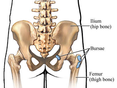 Bursae of the Hip: Posterior View