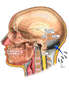 Immediate Post-operative Condition Following Skull Fixation