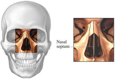 Anatomy of the Nasal Septum