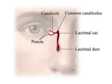The Lacrimal System