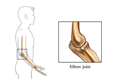 Normal Elbow Joint: Male