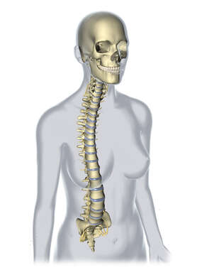 Female Figure with Skull and Spinal Column