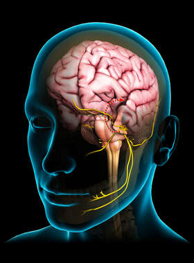Anatomy of the Trigeminal Nerve