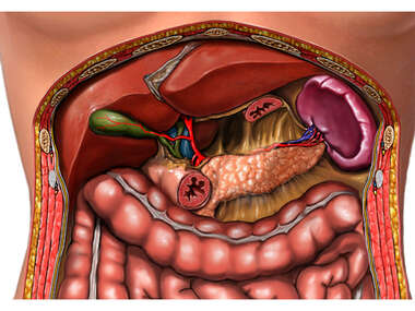 Liver, Gallbladder and Spleen