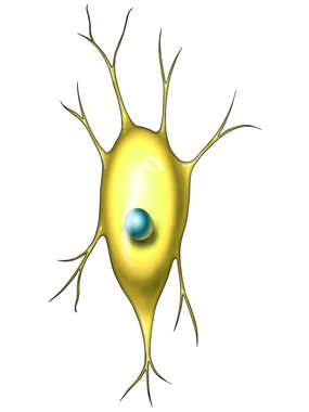 Neuron with Nucleus