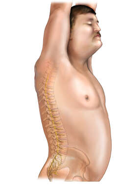 Spinal Column: Lateral Male