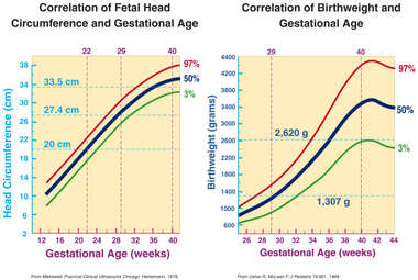 Fetal Head Circumference / Birthweight Chart and Graph